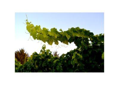 emina-sostenible-visita-y-cata-de-vinos-y-aceite-eco (1)