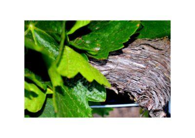 emina-sostenible-visita-y-cata-de-vinos-y-aceite-eco (3)