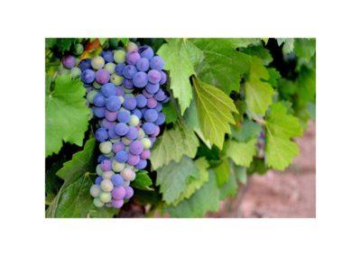 emina-sostenible-visita-y-cata-de-vinos-y-aceite-eco