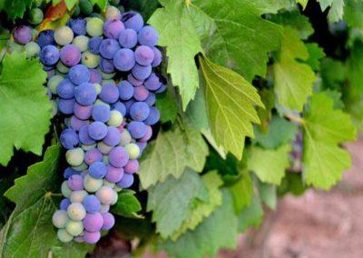 emina-sostenible-visita-y-cata-de-vinos-y-aceite-eco-5