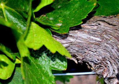 emina-sostenible-visita-y-cata-de-vinos-y-aceite-eco-6