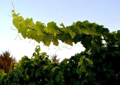 emina-sostenible-visita-y-cata-de-vinos-y-aceite-eco-8